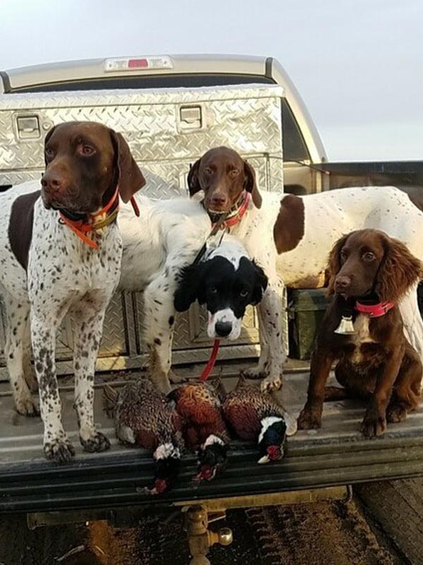 Hunting dogs - Wyatt, Brutus, Ruby & Ripley