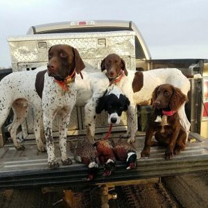 Sage Canyon Outfitters Dogs
